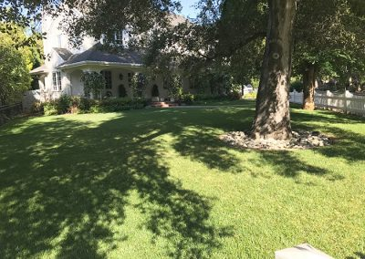 Front Lawn Restored
